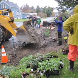Rain Gardens in Port Townsend